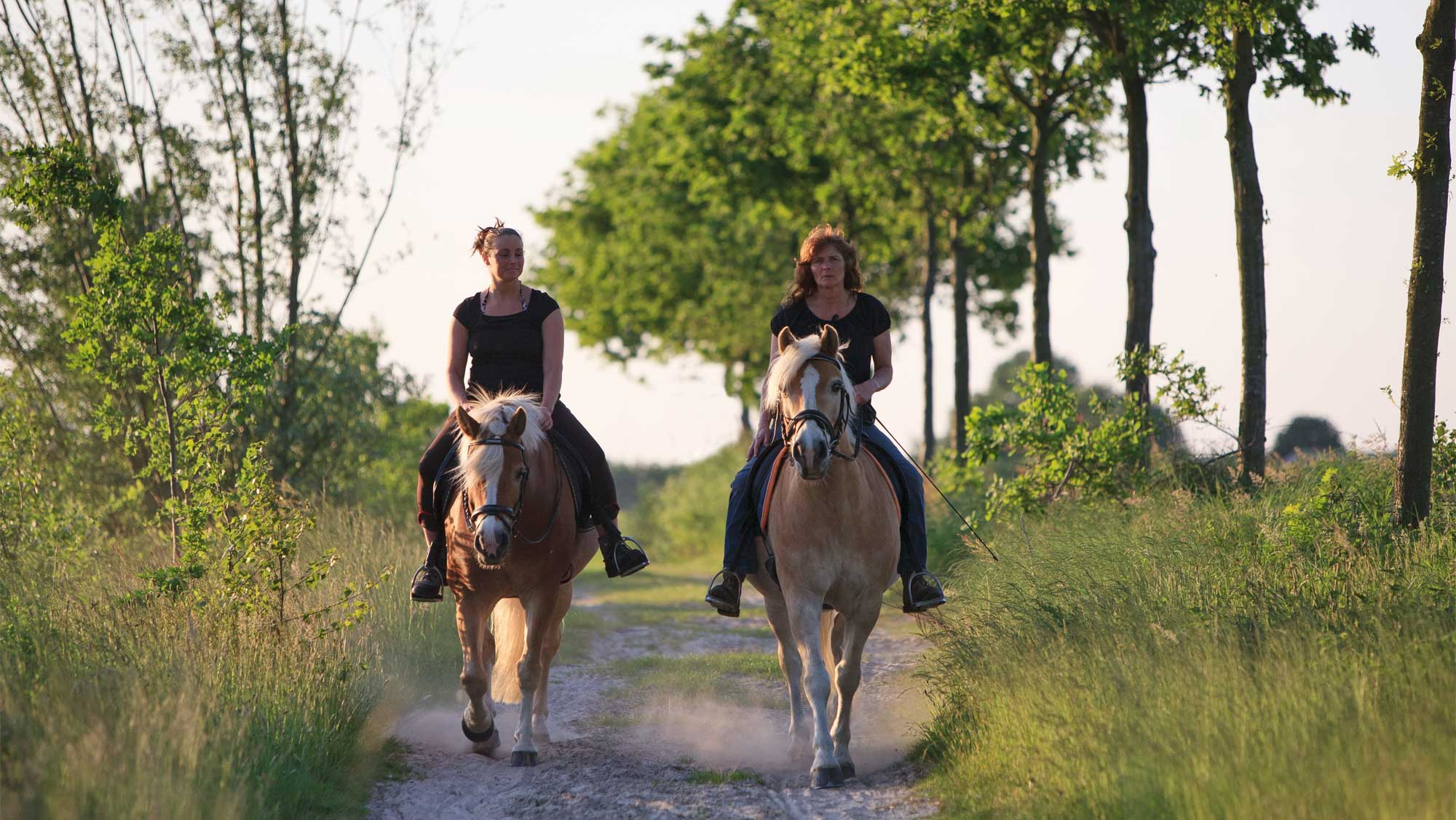 Omgeving Molecaten Park Bosbad Hoeven 14 paardrijden