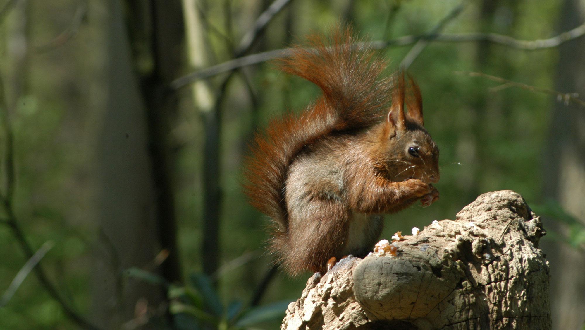 Omgeving Molecaten parken Hattem Heerde 31 eekhoorn